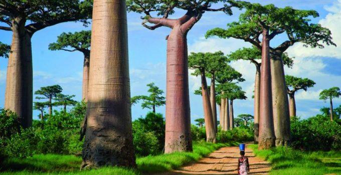 Imagen de la oferta Vuelos a Madagascar por 540€ ida y vuelta