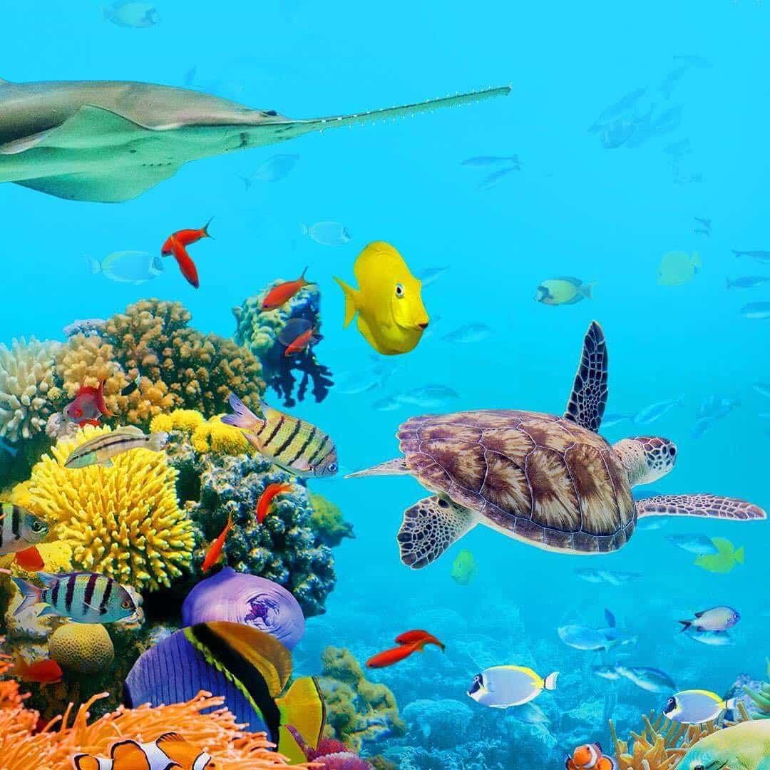 Peces tropicales del acuario de Sydney