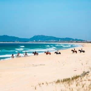 Praia da Comporta, caballos